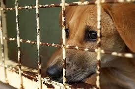 La violenza sugli animali e le attitudini criminose