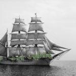 Sailing kaktus - Shira Wachsmann
