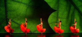 La nuova stagione della Filarmonica, un giardino di talento