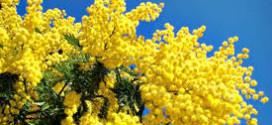 Non sia solo il giorno delle mimose